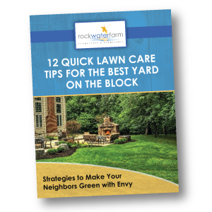 lawn-care-tips.png