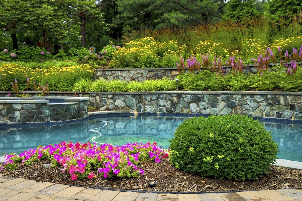 pool surrounded by plants