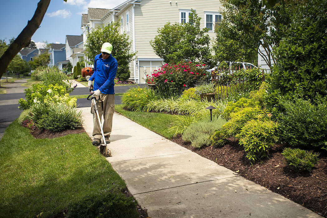 lawn-planting-shrubs-trees-edging-technician-4