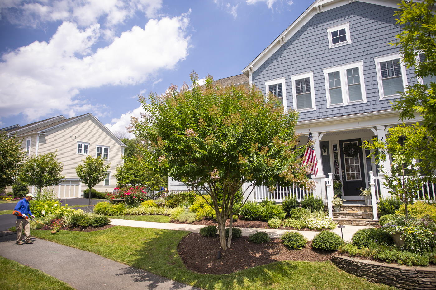 Healthy lawn with trees and shrubs