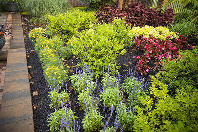 Landscape plants maintained by Rock Water Farm
