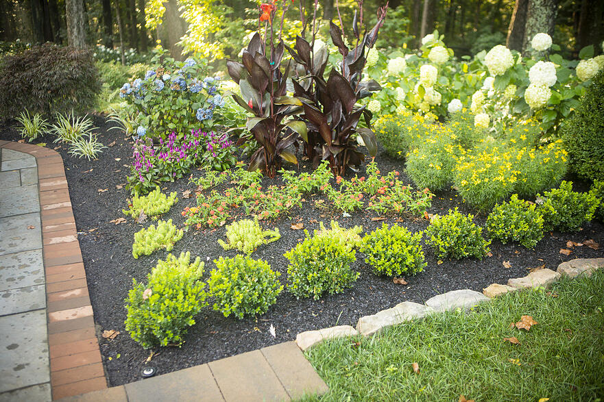 healthy plants and shrubs