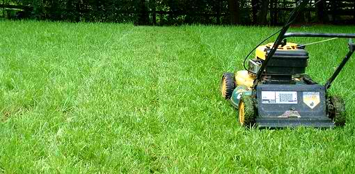 Haymarket, VA landscaping and lawn care tips for a tidy property all year long.