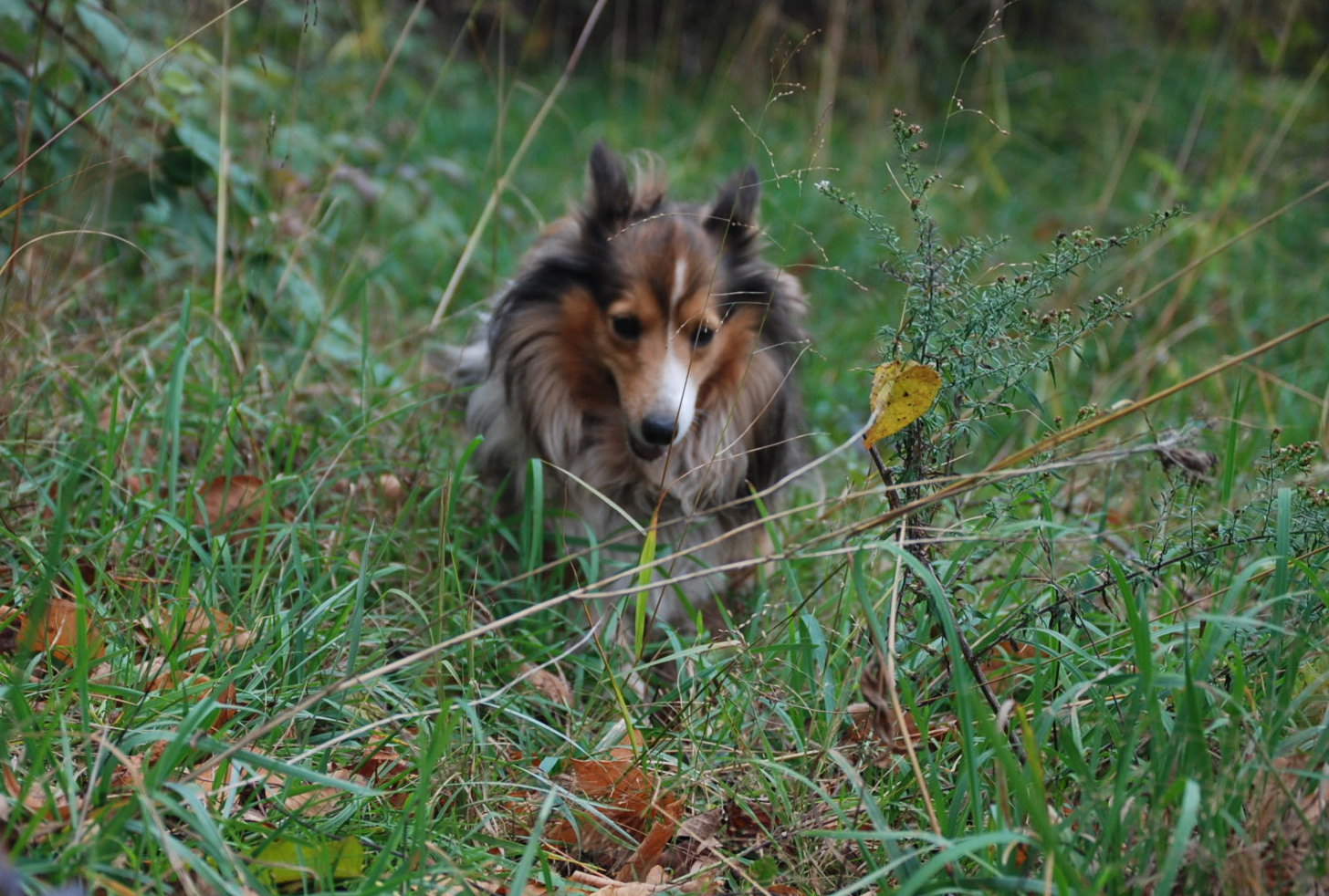 dog-in-grass-natural-pest-control