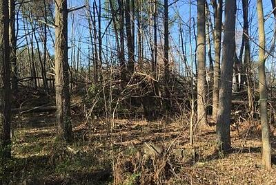 Forestry mulching and bush hogging in Aldie, Leesburg, & Middleburg, VA