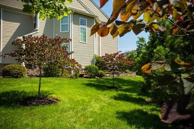 Trugreen lawn care vs Rock Water Farm