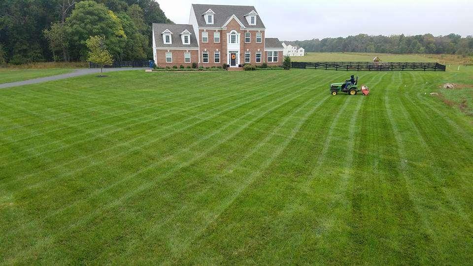professional lawn aeration