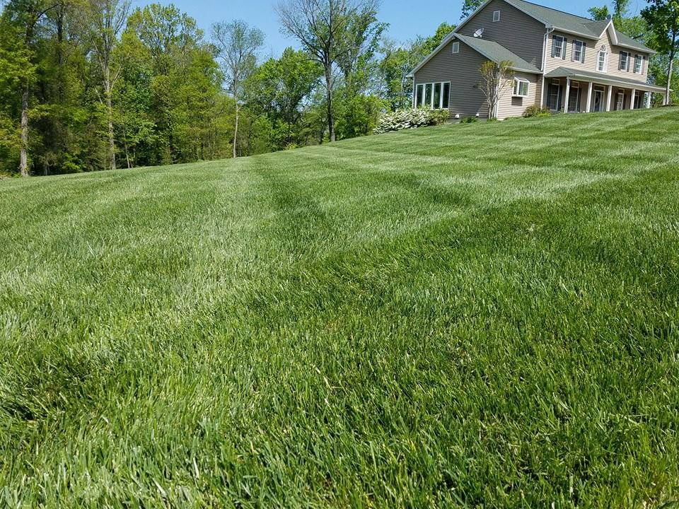 Cool-season grass in lawn in Virginia