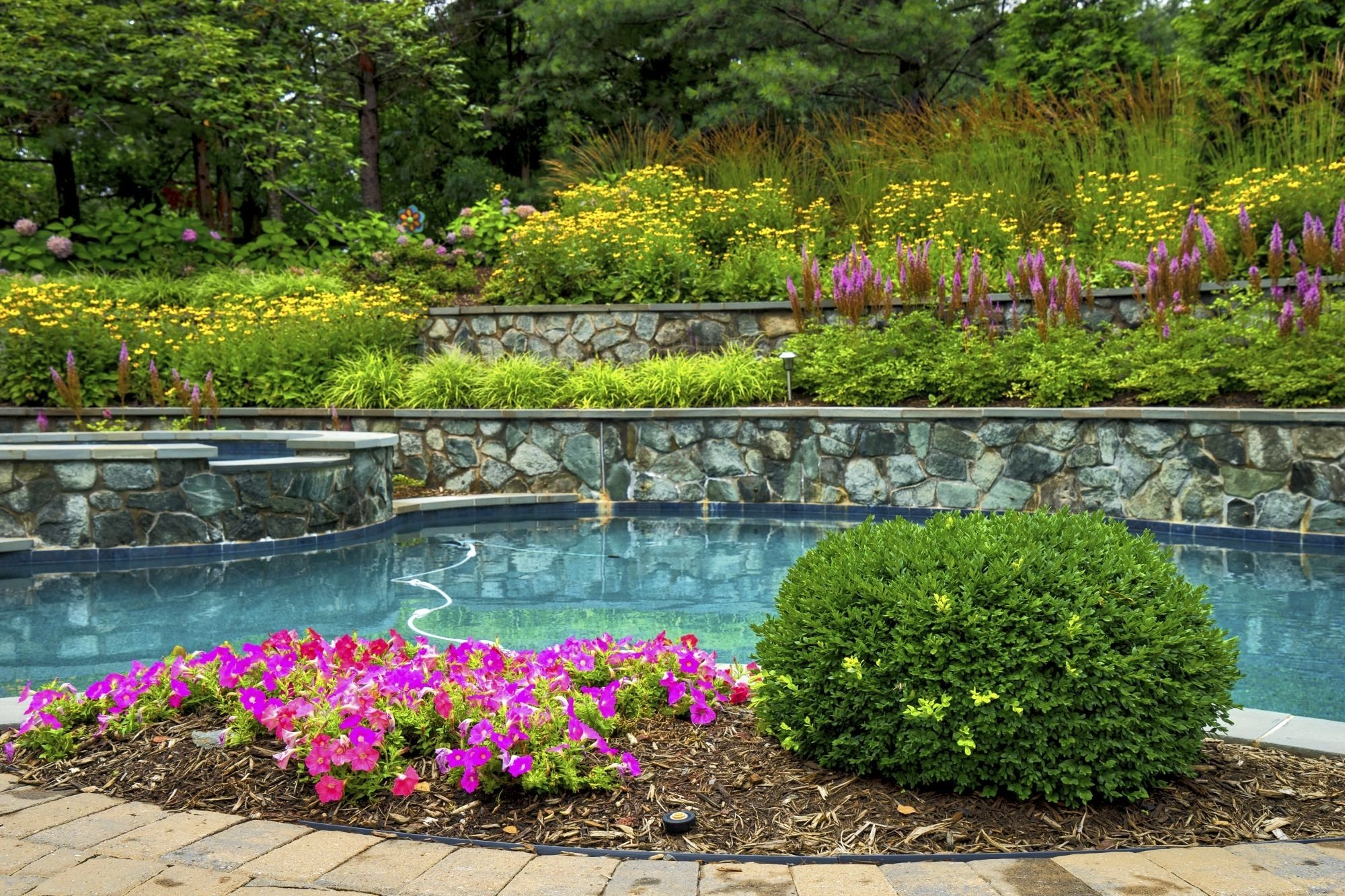 Pool landscape with blooming plants
