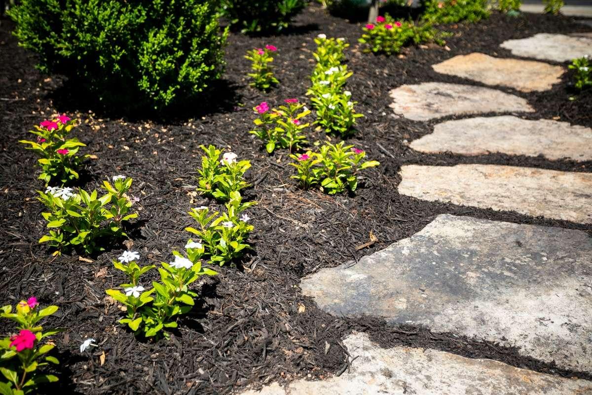 Annual flower planting