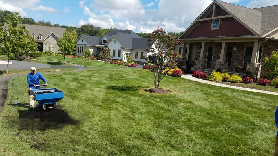 professional lawn topdressing