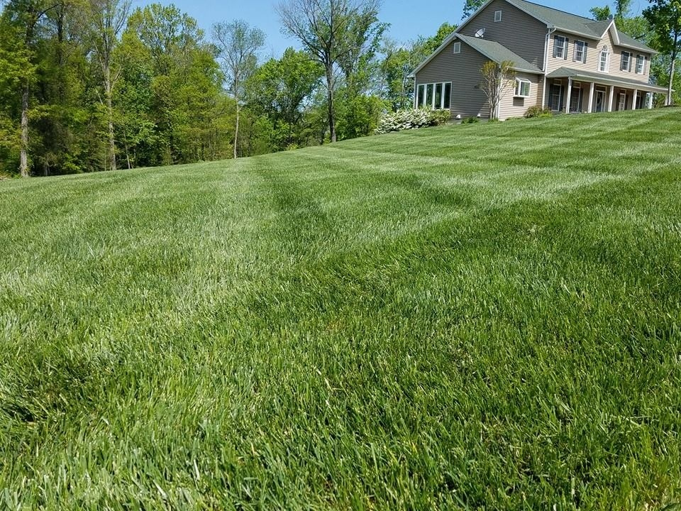 healthy green lawn with lime application
