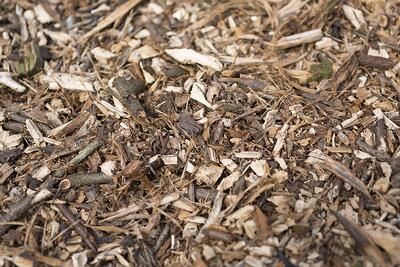 Wood chippings in a pile