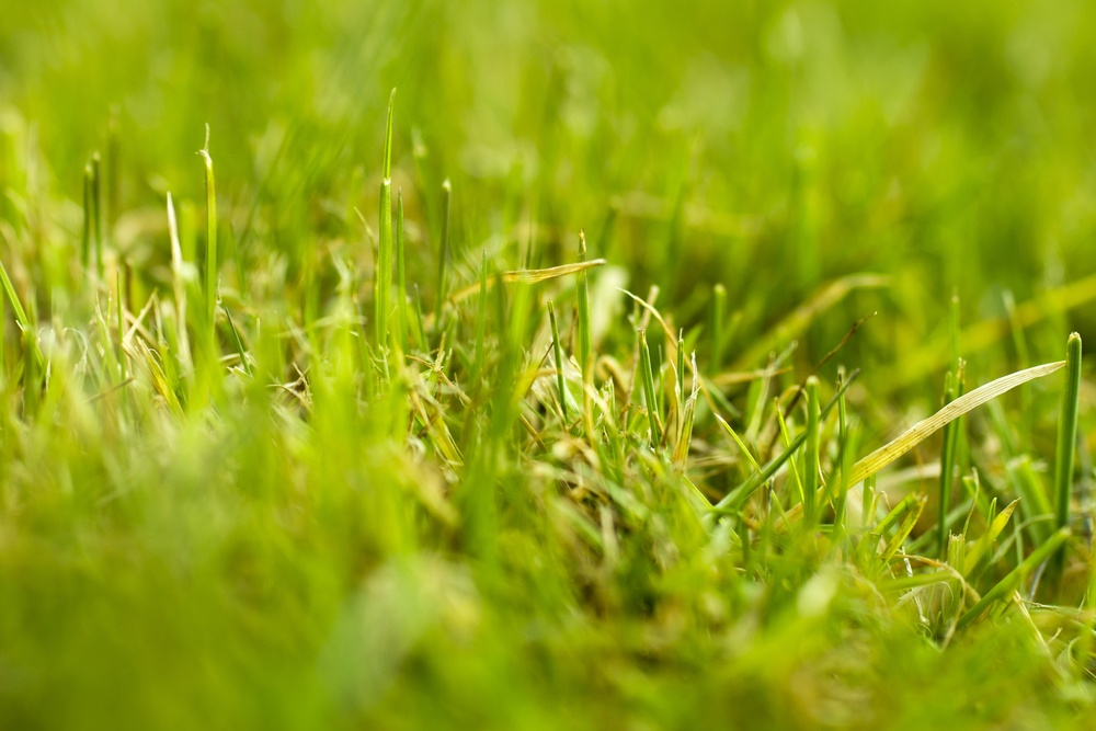 Grass with healthy soil