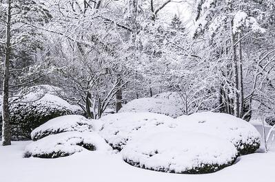 Check out these great winter landscaping design ideas and plants for Northern Virginia.