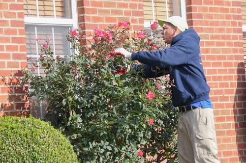 maintenance pruning crew