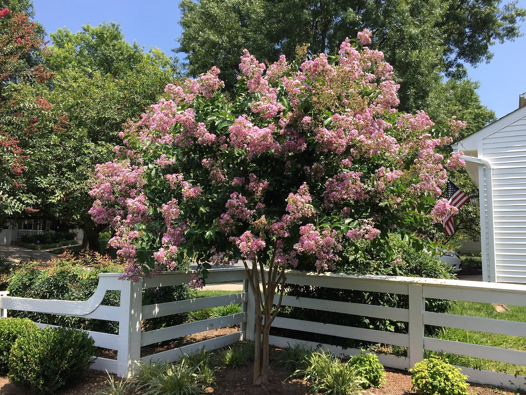 High-Maintenance Plants to Avoid Putting in Your Virginia Landscape