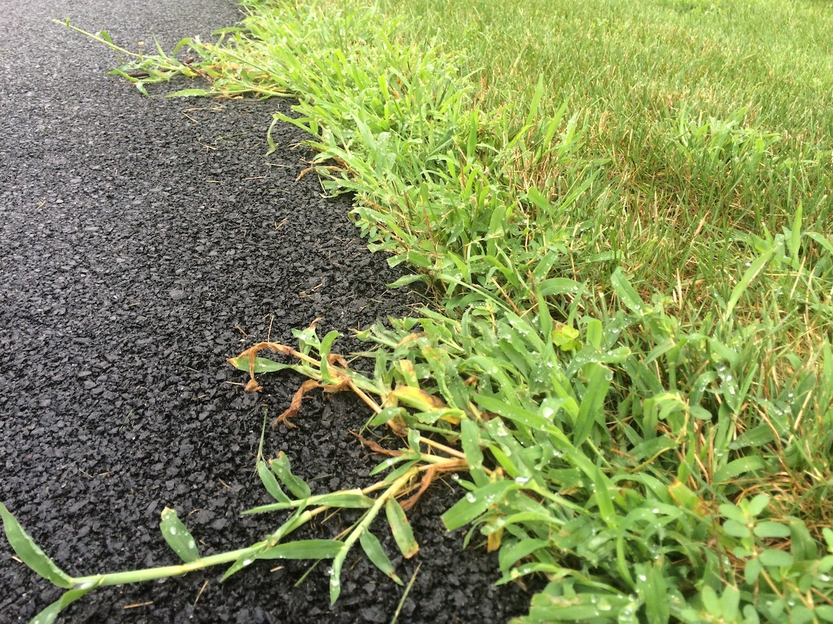 4 Pro Tips for Crabgrass Control and Prevention in Northern VA