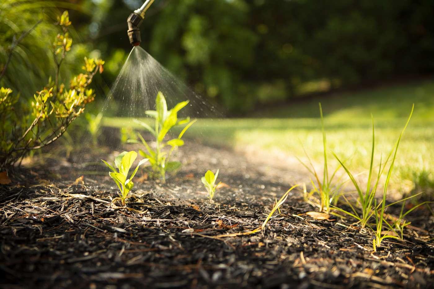 weeds in landscape bed