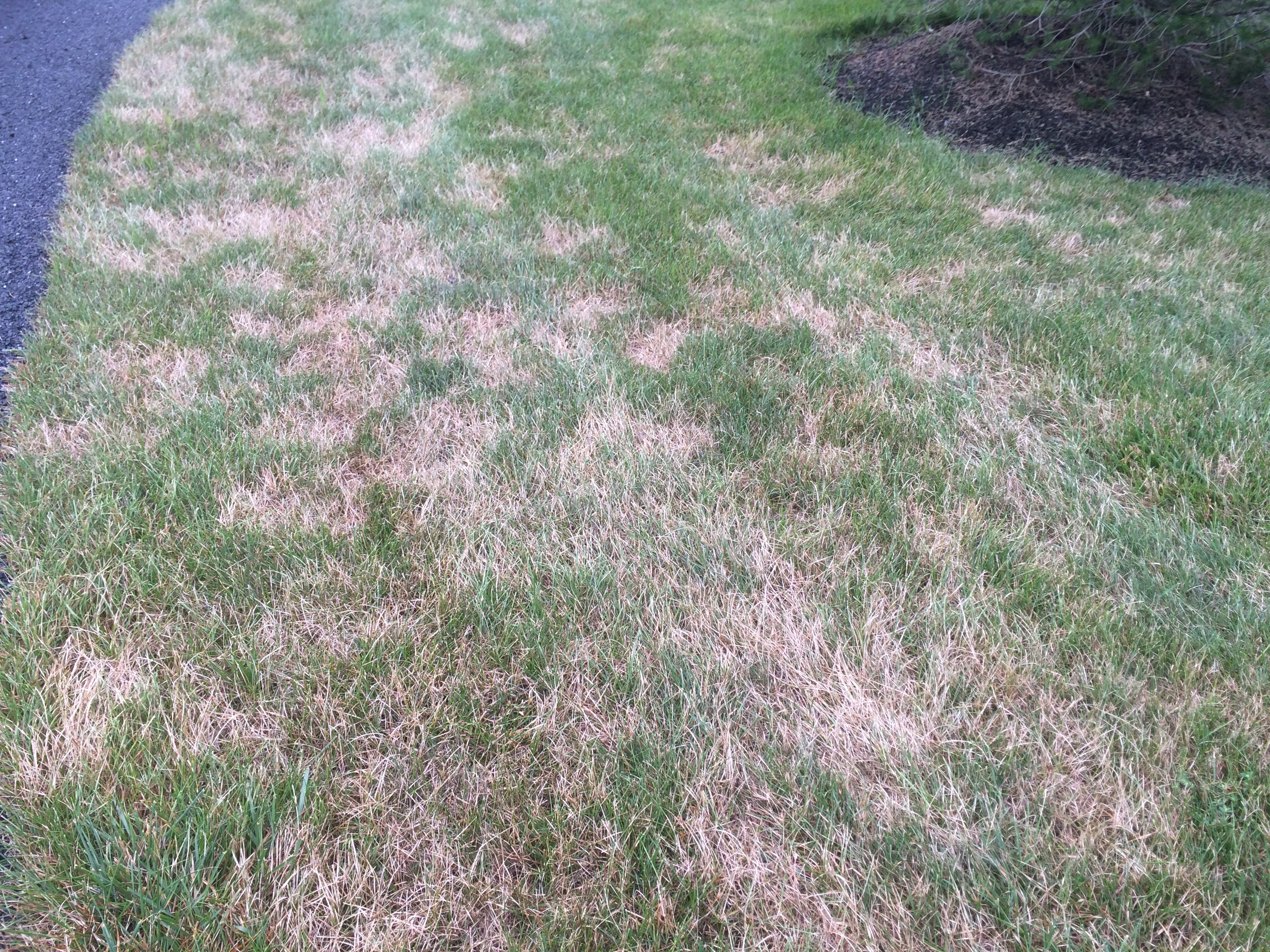 4 Puzzling Lawn Problems in Ashburn, Aldie, and Leesburg, VA (and How to Fix Them)