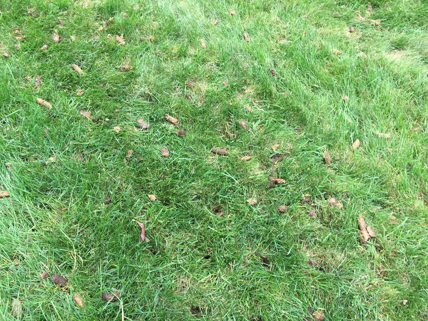 8 Questions to Ask When Hiring a Lawn Aeration Service in South Riding, VA
