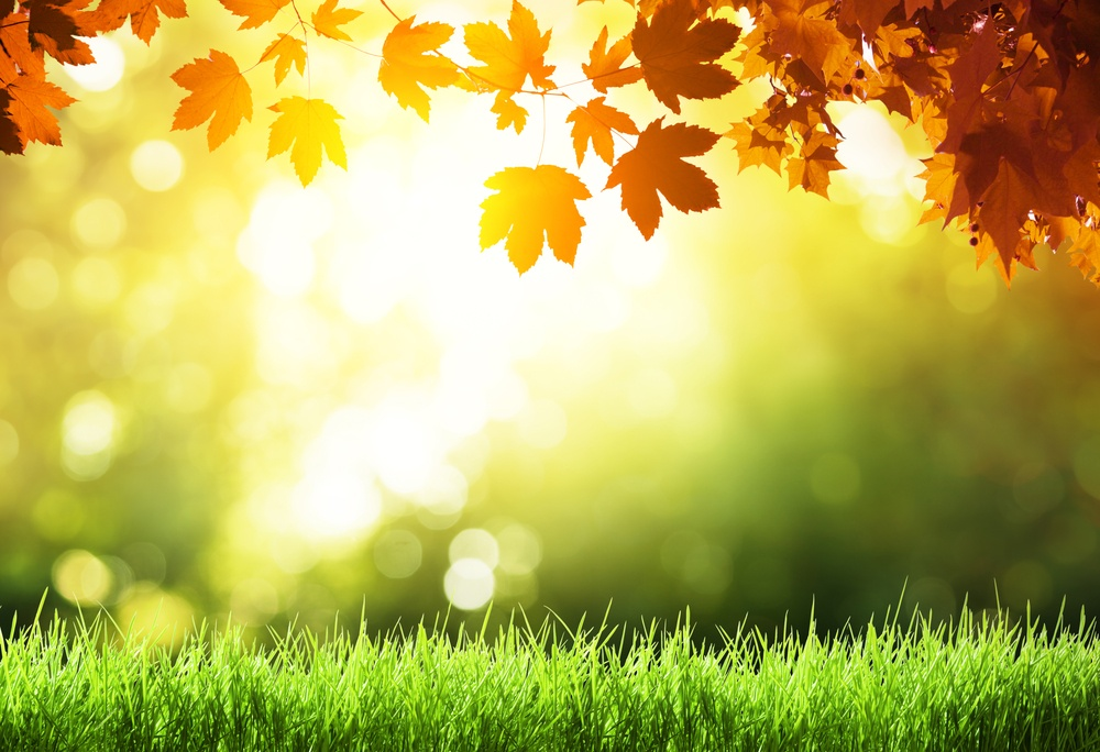 The 5 Worst Landscape Maintenance Mistakes You Can Make in the Fall