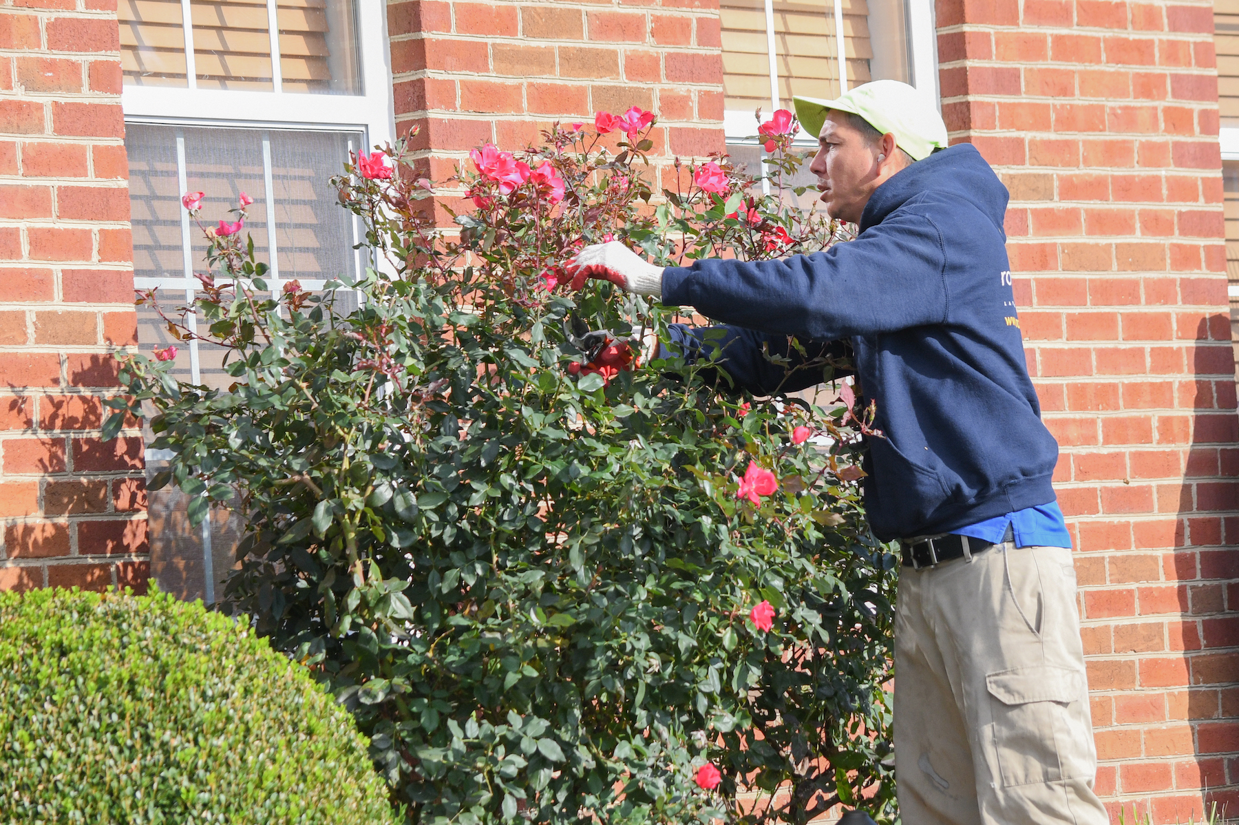 Pruning Tips For Your Small Ornamental Trees in Haymarket, Gainesville, and Warrenton, VA
